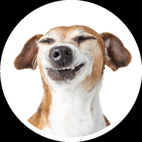 Für glückliche Hunde: Zookauf Konstanz