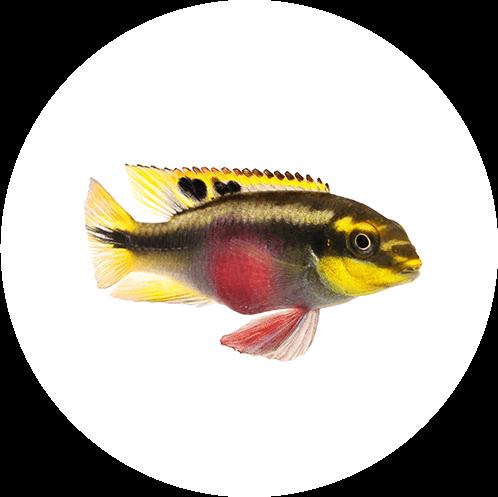 Umfassender Aquaristik-Bedarf in Konstanz