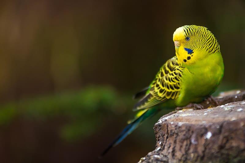 Was muss bei der Vogelhaltung beachtet werden? Wir informieren Sie.