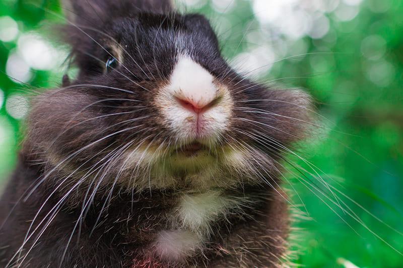 Kaninchenhaltung in Konstanz