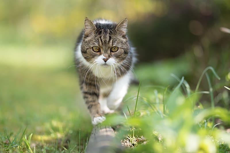 Ob als Freigänger- oder Wohnungskatze, so wird Ihre Katze glücklich