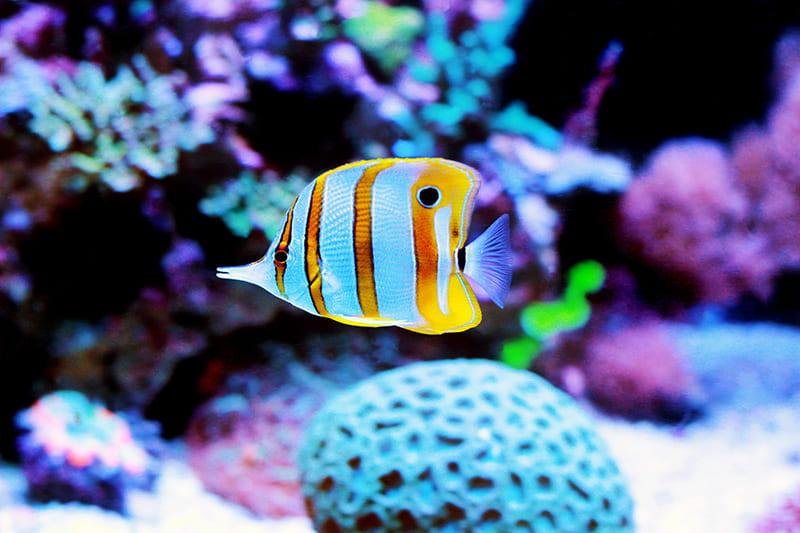 Gute Beratung im Bereich Aquaristik