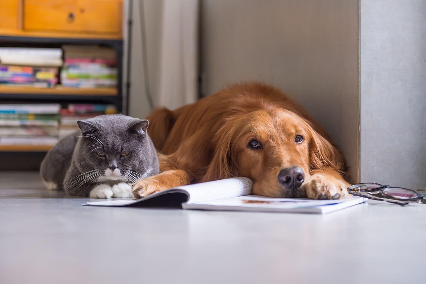 Lesen Sie das Haustier-Journal vom zookauf