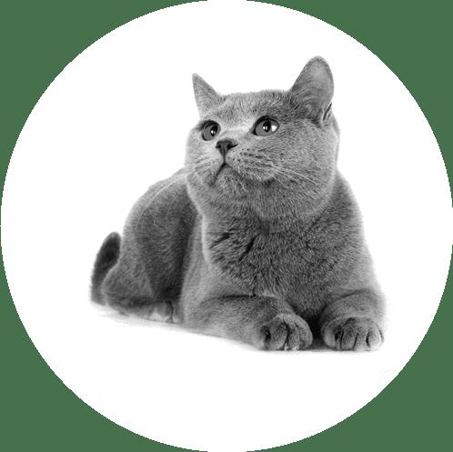 Alles für die Katz: Bei uns finden Sie ein umfangreiches Sortiment für Ihre Samtpfote
